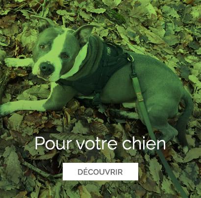 promenades chiens Versailles